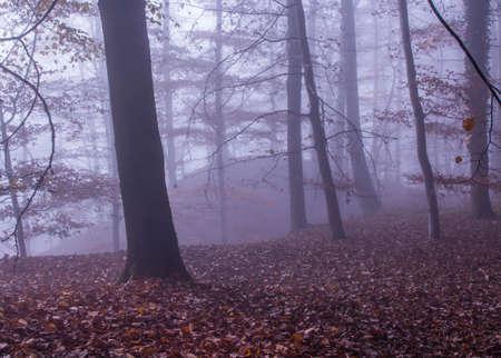 stratus: Nature Misty Forest Landscape Stock Photo