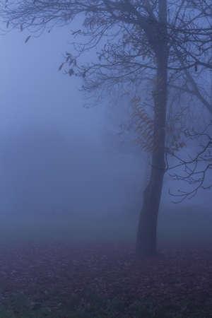 stratus: Nature Autumn Tree Fog Landscape