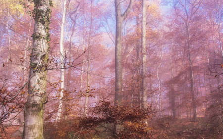 coloful: coloful Autumn forest Landscape