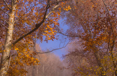 coloful: coloful Autumn trees