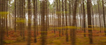 fog forest: Autumnal Coniferous Forest Nature abstract Background Colors