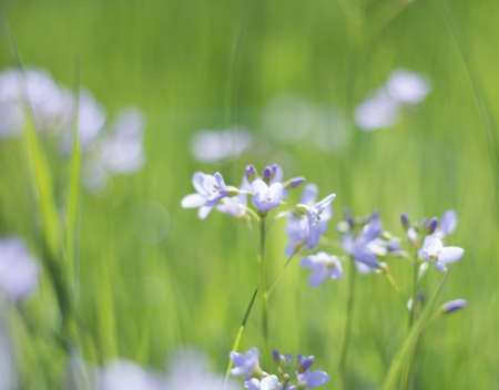 delicacy: Nature spring details wildflowers abstract green Background