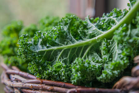 Kale green cabbage in rustic basket