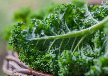 Kale green cabbage in rustic basket Winter Superfood