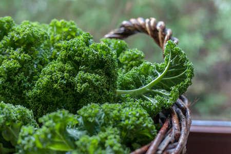 Kale green cabbage in rustic basket on Windows light