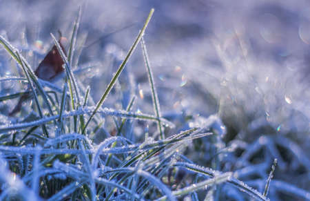 lawn grass: Winter frost on grass and bokeh background Nature seasonal details
