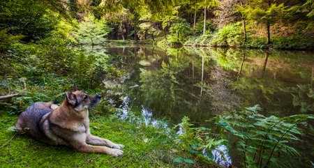 shepperd dog at Forest lake  wildlife nature calm landscape scenery