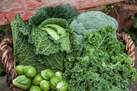 sorts: different green cabbages in basket Seasonal Vegetables on daylight Stock Photo