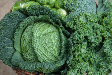 sorts: various green cabbages in basked winter Seasonal Vegetables on daylight Stock Photo