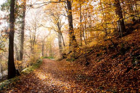 Autumn colorful Forest Hiking trail Rheinsteig in Siebengebirge Germany