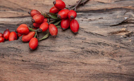 Fresh rosehip on wood rustic background in daylight Autumn Berries