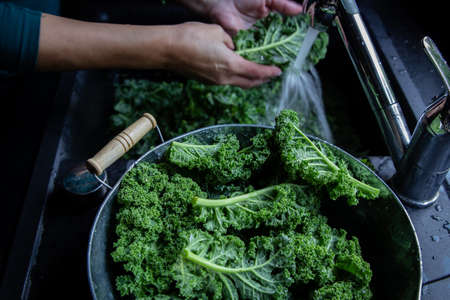 Woman is washing kale leaves with water on the kitchen sink on windows light