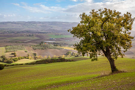 Authentic tuscany cultivation Fields Landscape in Rocca d'Orcia Italy