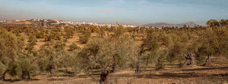 Andalusia Agriculture  Landscape with view of the cityscape of Ronda Travel Spain 版權商用圖片