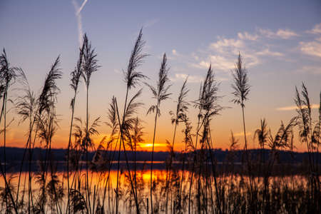 lake with reed Silhouette at Colorful sunset scenery  Nature Backgrounds