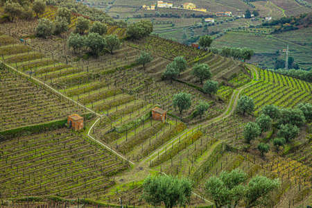 Green hills countryside  in the Douro valley wine growing region north Portugal Standard-Bild