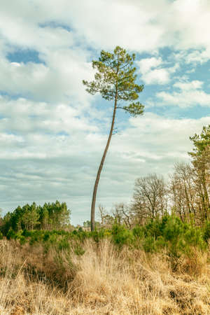 Pine Tree and sky Landscape Nature France