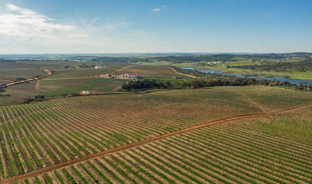 Aerial view of the industrial mediterranean agriculture landscape in Olivenza Extremadura Spain Editorial