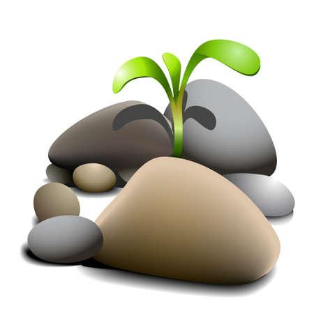 Small plant growing between stones Stock Vector - 6050856