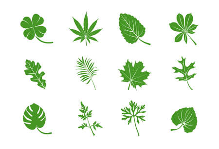 nettle: Green leaves  Illustration