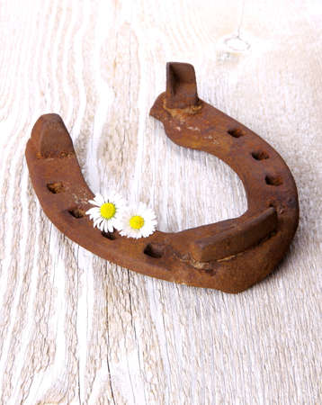 Old horseshoe with three camomile at wooden background, close up photo
