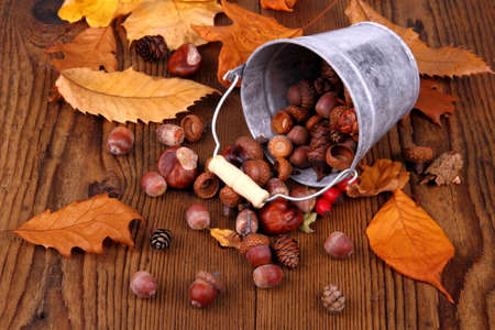 distributed: Zinc bucket with distributed acorn, chestnut and rosehip, close up