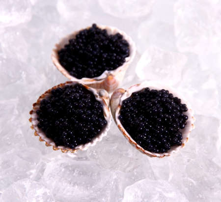 Three shell with black caviar on ice, top view photo