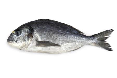 Fresh bream fish isolated, close up photo