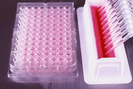 amplification: Outils pour l'amplification par PCR de l'ADN, plaque � 96 puits avec une pipette automatique