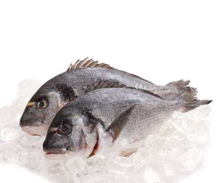 sparus: Couple of fresh gilt-head on ice, top isolated Stock Photo