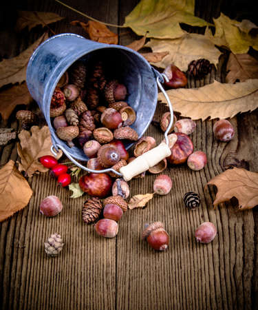acorn: Scattered rosehips, acorns from bucket on old wooden autumn leaves