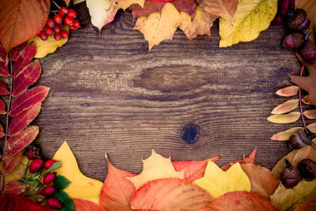 gold tree: Old wooden board with autumn leaves, top view Stock Photo