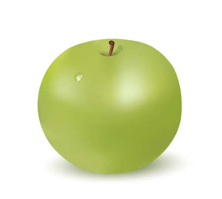 青リンゴ、白い背景で隔離  イラスト・ベクター素材