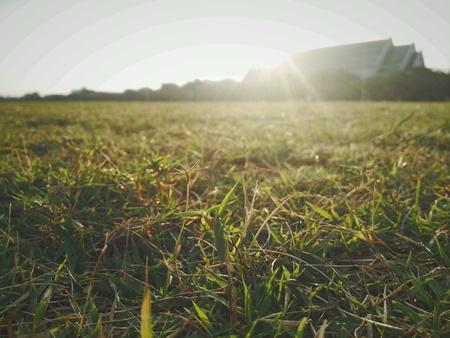 bright: Grass Stock Photo