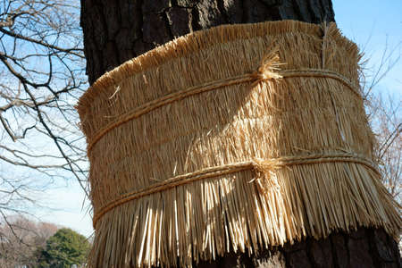 Protection of winter over the trees straw mat