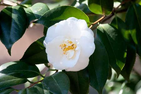 dazzling: Dazzling white flowers