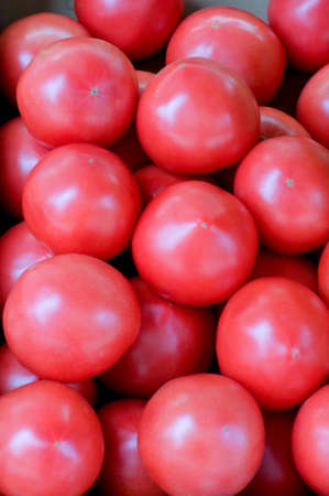 greengrocer: Greengrocer of bright red tomatoes