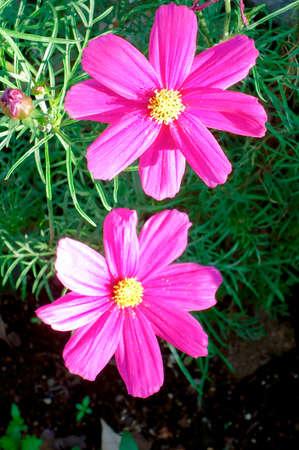 Bloemen schitteren in de ochtendzon