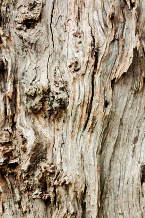 mottled skin: Bark of old trees that were rotting in the aged Stock Photo