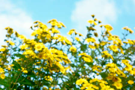 equinox: Yellow flowers shine in the morning sun of the autumn equinox people