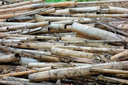 蓄積場所の竹は長年蓄積され、放置された 写真素材