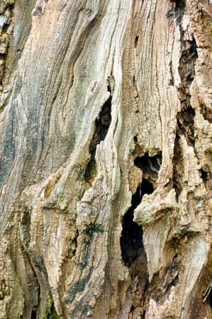Trunk of dead trees