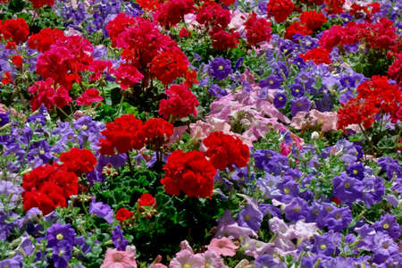 Colorful color gardening flowers Banco de Imagens