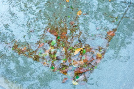 Fallen leaves scraped by water