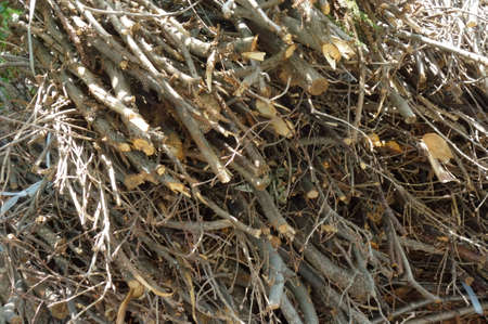 Bush twigs harvested and collected