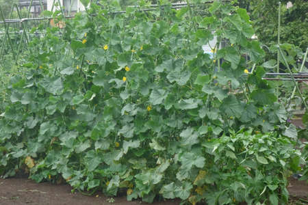 Vegetable field that could be maintained