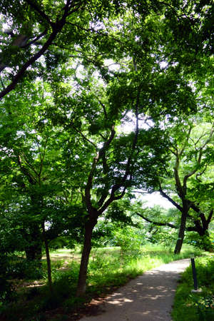 Forest covered with fresh green Фото со стока