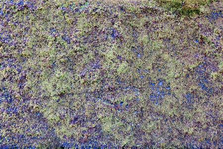 Fantastisches und abstraktes Moosoberflächenmuster Standard-Bild