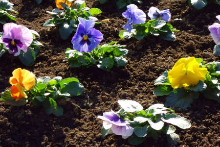 Nice flowers planted neatly in the flowerbed