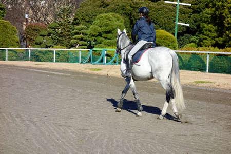 Baba riding pattern at Baba Park